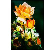 Life After Death Photographic Print