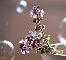 basil and bubbles by Hege Nolan