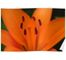 Orange Beauty IV Poster