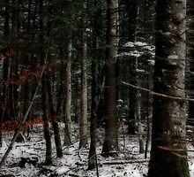 where is the little red riding hoot by Patrick Monnier