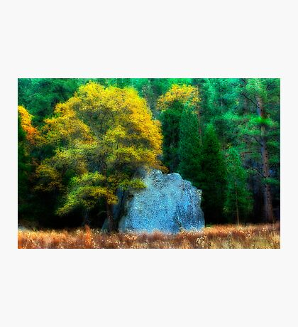 Autumn Oak and Rock Photographic Print