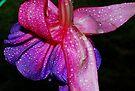 Bright & Brilliant Fuchsia by Tori Snow