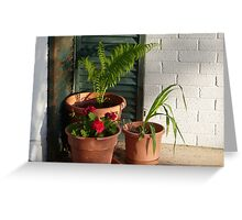 """Three Potted Plants"" Greeting Card"