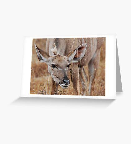 Curiosity Greeting Card