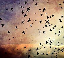 The Flock by Heather Reid-Barratt