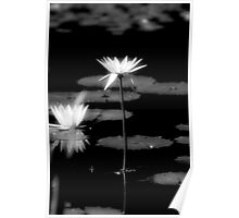 Excalibur - Water Lily Poster