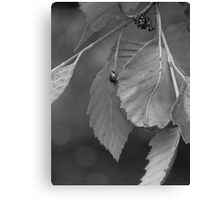 Lady Bug Lady Bug Fly Away Canvas Print