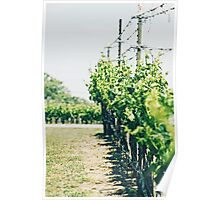Flat Creek Winery Poster