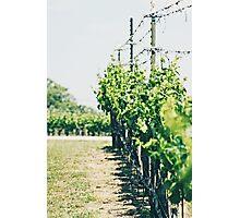 Flat Creek Winery Photographic Print