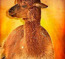 Alpaca   by LudaNayvelt