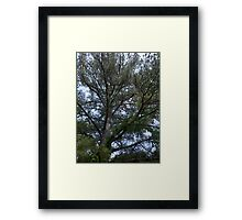 Branched Thought Framed Print