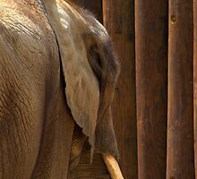Elephant Abstract by donnau