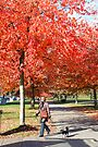 Walking the Dog, Vancouver City, Canada  by Carole-Anne
