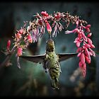 Hummingbirds  by Saija  Lehtonen