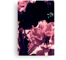 Azalea blow - three Canvas Print
