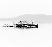 Death of a Huon Pine by Kana Photography