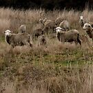 Just Sheep by Seraphina6