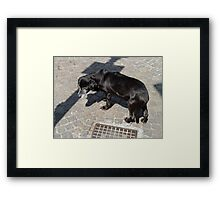Love of dogs transcended the language barriers. Framed Print