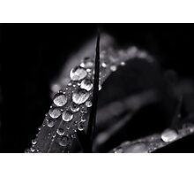Descending Winters Photographic Print