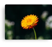 Fire Flower Canvas Print