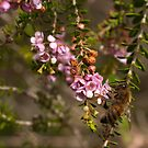 Busy Bee by SusanAdey