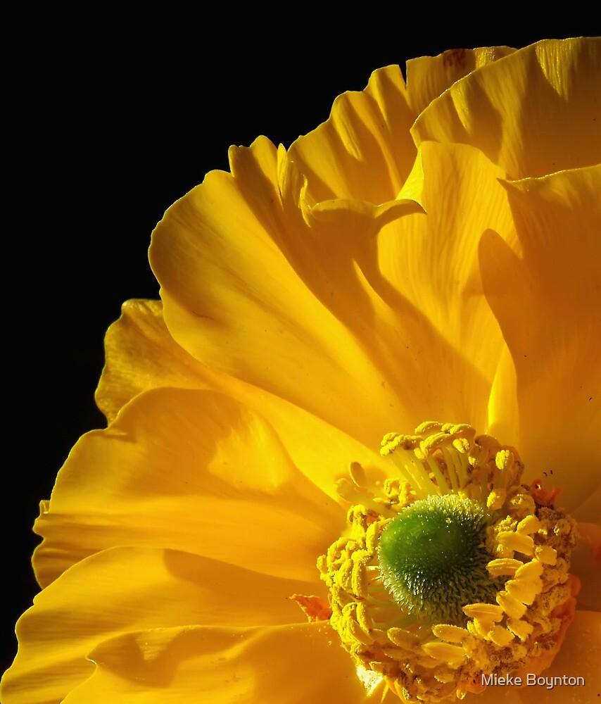 Yellow by Mieke Boynton