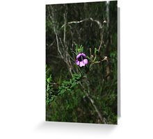 Mt Vincent mintbush, Prostanthera stricta Greeting Card