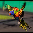 Flying Colours by John Van-Den-Broeke
