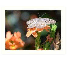Beige colored butterfly with tropical flowers Art Print