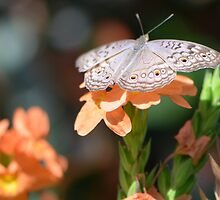 Beige colored butterfly with tropical flowers by Paula Betz