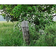 Sunday fence post Photographic Print