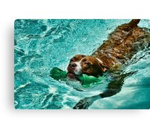 Pebbles the pit bull Canvas Print