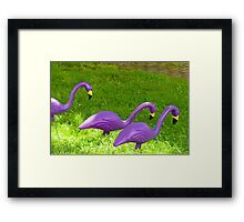 Three flamingos Framed Print