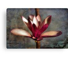 Japanese Tulip Magnolia Canvas Print