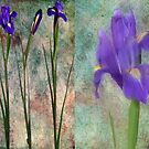 PURPLE IRIS DIPTYCH by Spiritinme