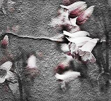 Wall Flowers by SquarePeg