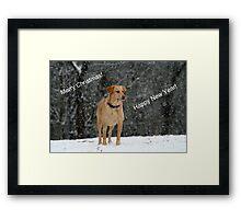 Labrador in the Snow Framed Print