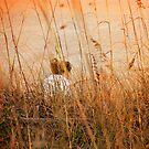 Flirting with Summer by Susanne Van Hulst