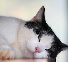 Sleepy Kitty by DebbieCHayes