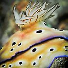 Nudibranch gills - close up by shellfish