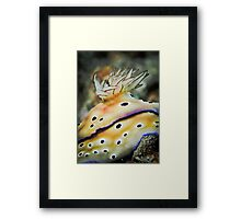 Nudibranch gills - close up Framed Print