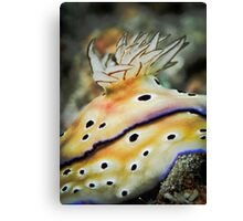 Nudibranch gills - close up Canvas Print