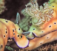 Nose to tail - sea slugs by shellfish