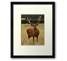 Impressive Antlers Aren't They? Framed Print