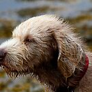 Windswept Dog by SWEEPER