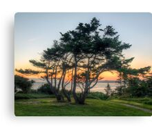 The Sunset Tree Canvas Print