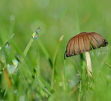 Dewy Shroom by relayer51