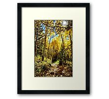 Golden Aspen Groves in Colorado Framed Print