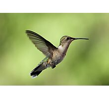 Another Hovering Hummingbird. Photographic Print