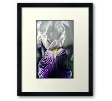 Smiling Iris Framed Print